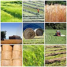agricoltura-azienda-impresa