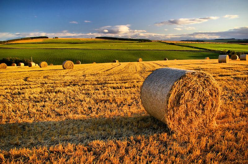 esonero-contributivo-2017-agricoltura